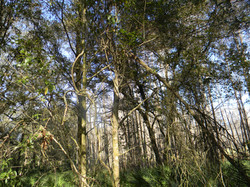 Tree Break3