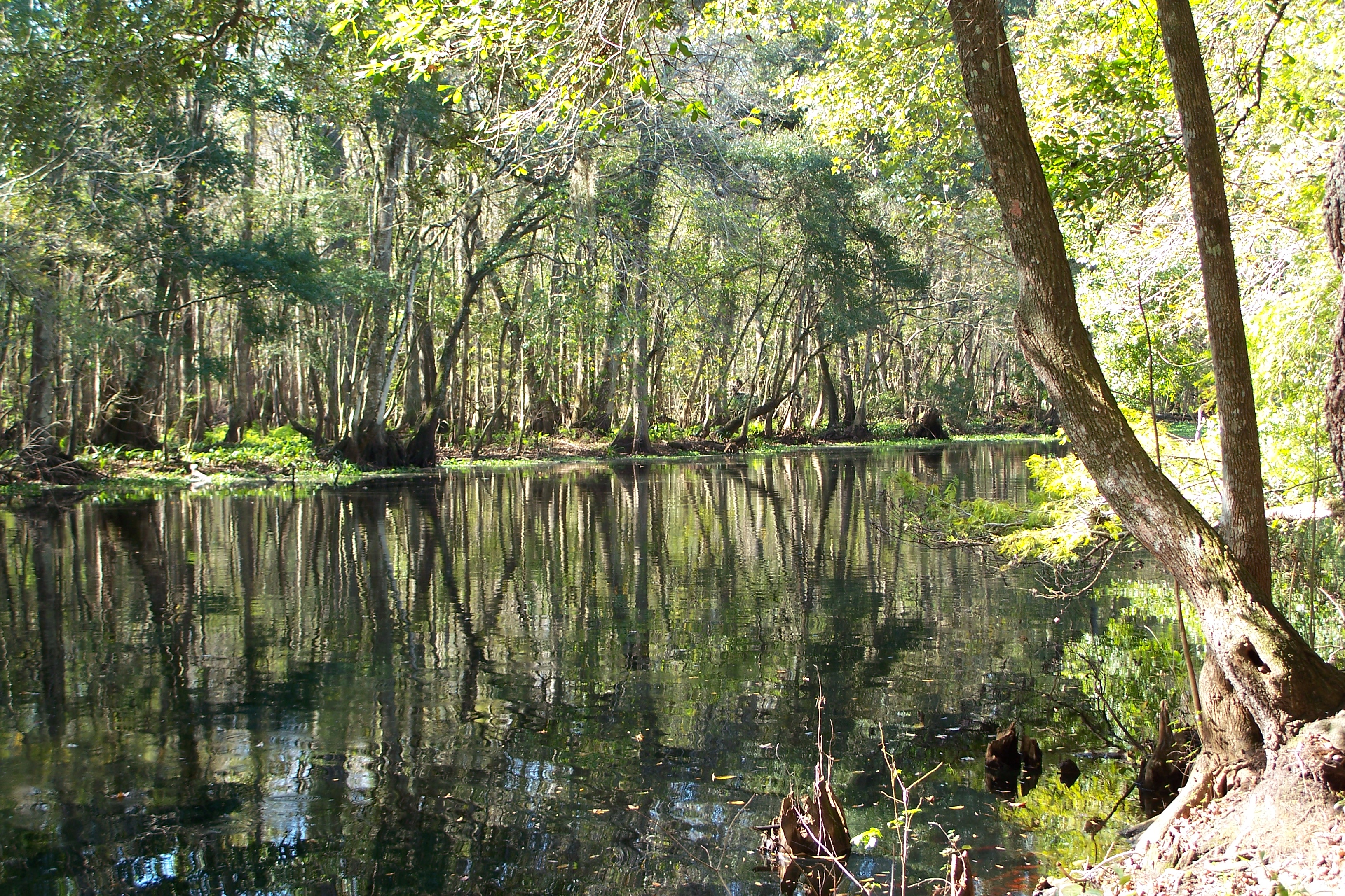 Green Swamp FL