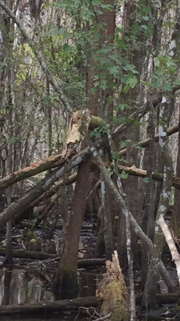 Possible tree structure near tracks