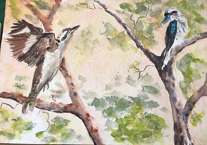 Kookaburras, wtercolour