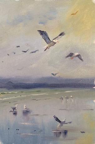 Seagulls, oil