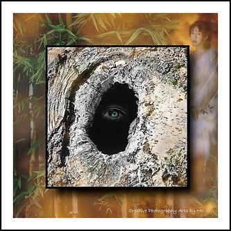 $(Birch Eye AWA).jpg