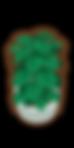 obj_plant_002.png