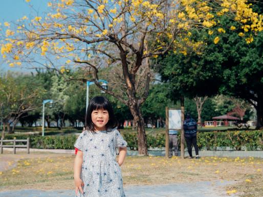 廍子公園 / 黃花風鈴木 / 親子寫真