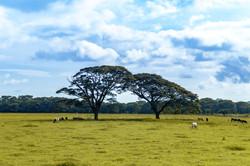 Costa Rica Steppe