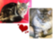 European Maine Coon Kittens For Sale, Los Angeles, California
