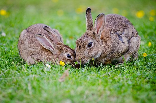 animals-bunnies-bunny-33152.jpg