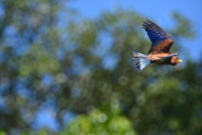 Bird3-small.jpg
