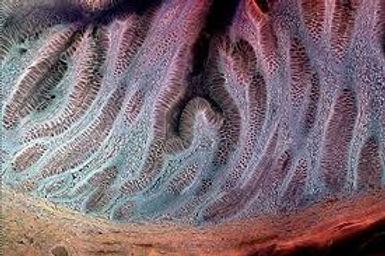 000skinmicroscopy.jpg
