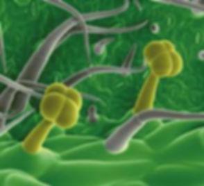 0000microscopy.jpg