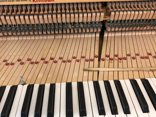 So, What's the Difference Between a Budget Piano and a Steinway?