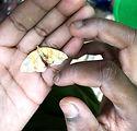 moth in hands.jpg