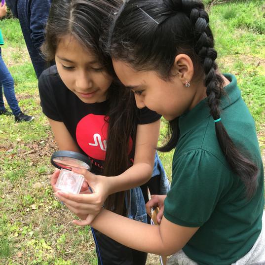 Children observe invertebrates