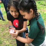 Children observe invertebrates