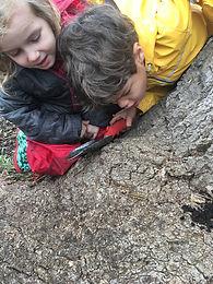 children watch millipede on log.jpg