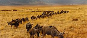 5-days-Masai-Mara-wildlife-and-Cultural-