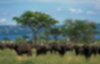 Murchison-Falls-National-Park4.jpg