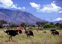 Kidepo-Valley-National-Park1.jpg
