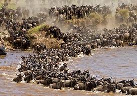 Masai-Mara-Wildebeest-Migration-Safari-1