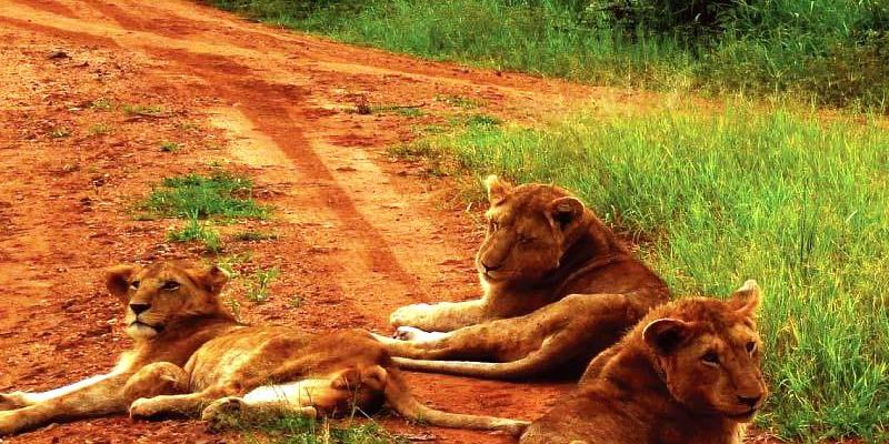 Relaxing Lions