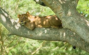 Tree_lion_2.jpg
