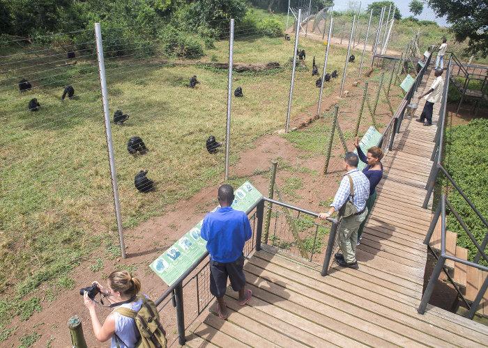 Feeding-Platform-Ngamba-Island-Chimpanzee-Sanctuary-Uganda