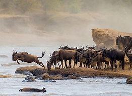 kenya-great-migration.jpg