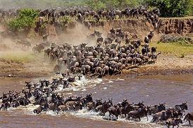 Wildbeest Migration..jpg