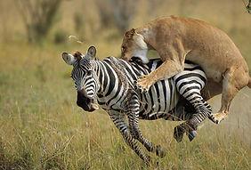 5-Things-to-do-When-you-Visit-Masai-Mara
