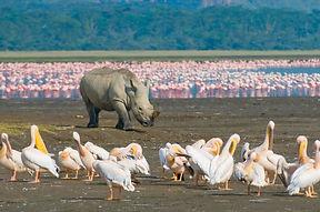 rhino-in-lake-nakuru-national-park-kenya