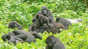 Rwanda-Gorilla-Tours.jpg