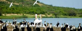 birding-in-uganda15.jpg