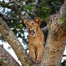 wowed little cub.jpg