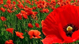 Remembrance Sunday. Nov.14th 2021
