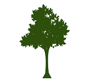 TheBirch_tree.png