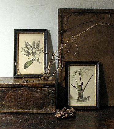Set of 4 Antique Botanical Prints