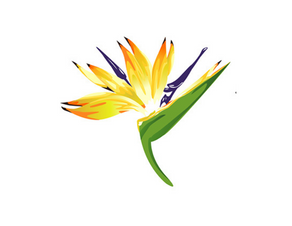 Welcome on board: Johannesburg International Flower Show.