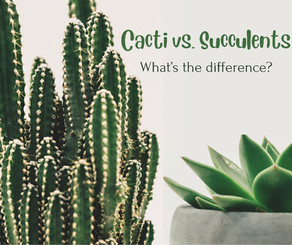 Cacti Vs. Succulents: What's The Difference?