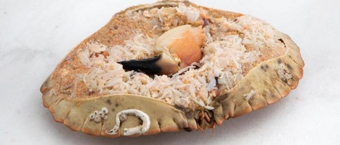 Cornish Dressed Crab (182g)