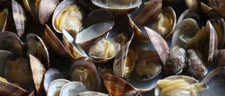 Fresh Clams 1kg-2kg bags