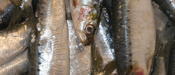 Sardines 1kg (c.10-12)
