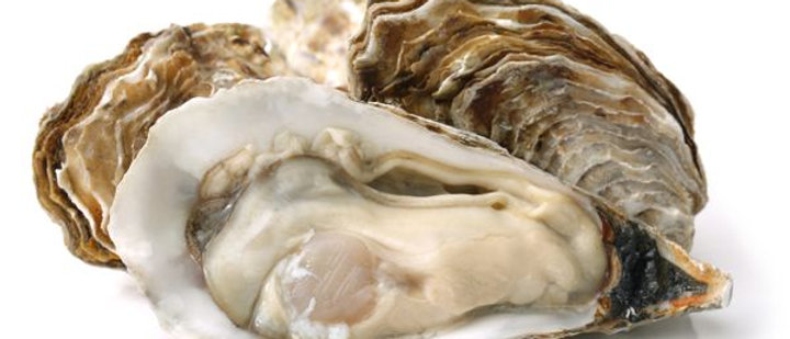 Fresh Live Oysters x 6