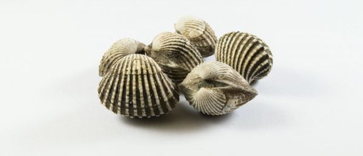 Fresh Cockles 1Kg