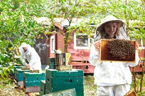 1_Länderinstitut_Bienenkunde_006.jpg
