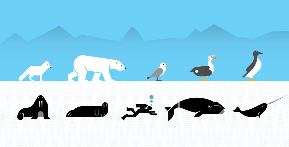 Arctic animals  -Condé Nast Traveler-