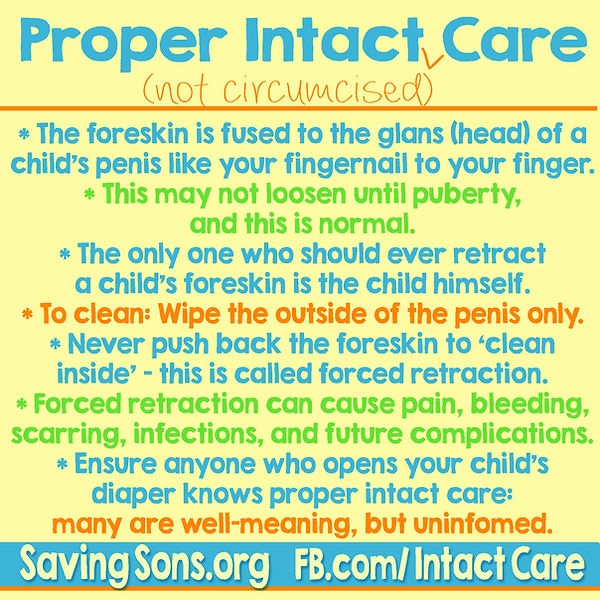 Proper Intact Care (uncircumcised care). The foreskin is fused to the glans (head) of your child's penis, like your fingernail to your finger.
