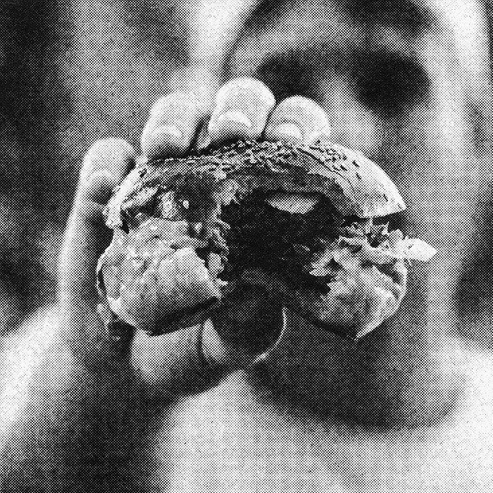 burgertone_10.jpg