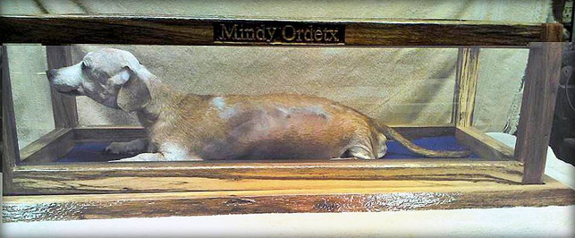 Pet Display Case
