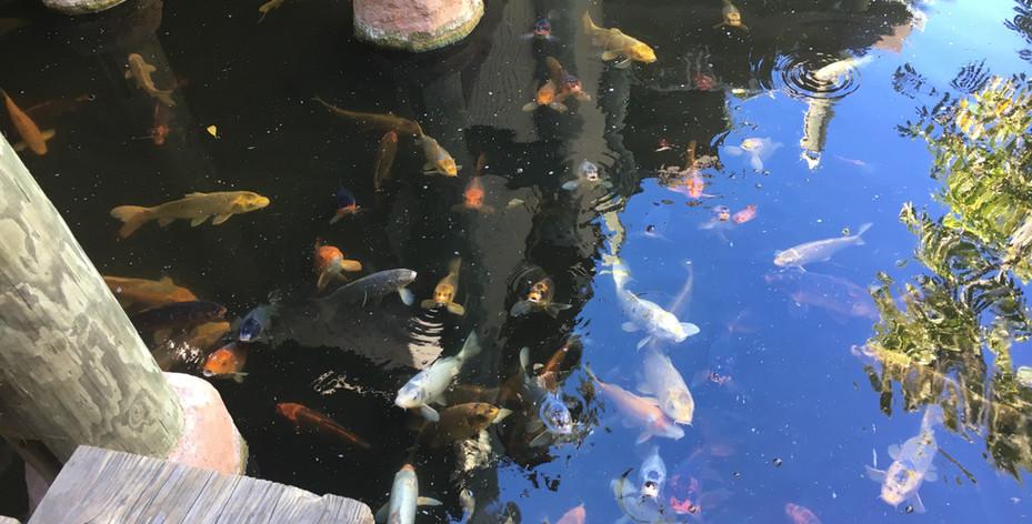 Coi Pond