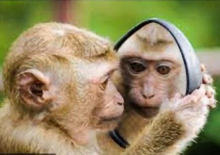Those Pesky Chattering Monkeys!